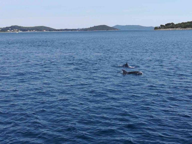 delfini_orig